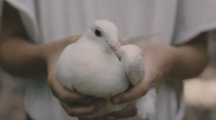 RESA + DEK – Biela holubica